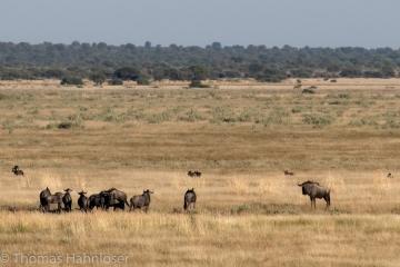 Africa2019-224