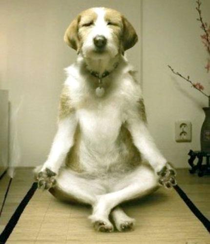 Inner_peace_Dog