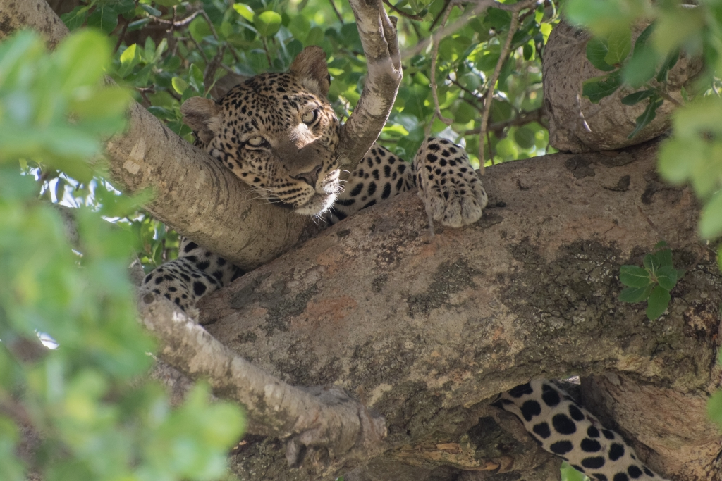 Serengeti Nord