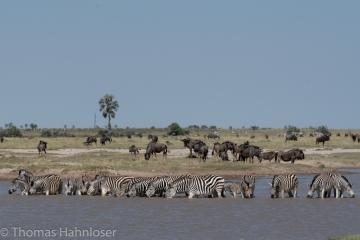 Africa2019-336